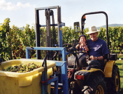 vendanges_2008_tracteur2.jpg (28 KB)
